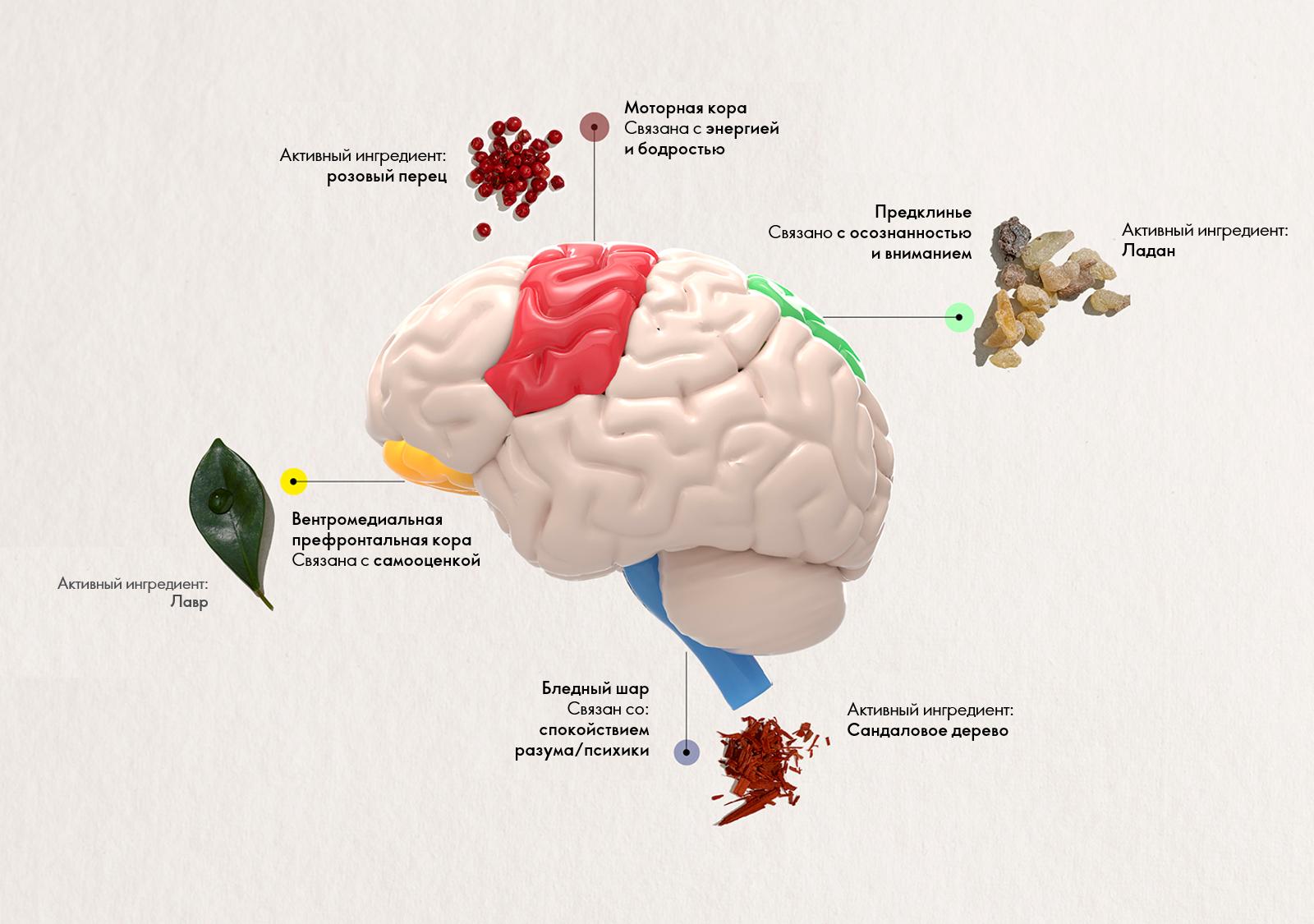 влияние эфирных масел на мозг